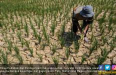 Petani Lebak Beralih Mengembangkan Tanaman Sayuran - JPNN.com