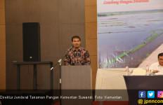 Kementan Yakin Pemanfaatan Rawa Bakal Bikin Sumsel Surplus Beras - JPNN.com