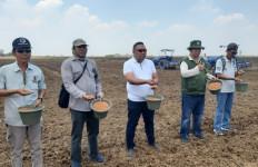 Luas Tambah Tanam Padi Sumsel Diyakini Capai 200.000 Hektare Selama Musim Kemarau - JPNN.com