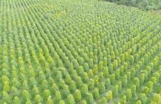 2019, Ekspor Perkebunan dan Peternakan Tumbuh di Atas 4 Persen - JPNN.com