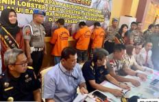 Bea Cukai Makassar Gagalkan Penyelundupan 19 Ribu Bayi Lobster - JPNN.com