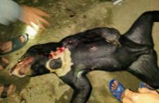 Karhutla Meluas, BKSDA Minta Warga tidak Buru Satwa Liar yang Masuk Perkampungan - JPNN.com