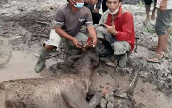 Karhutla Meluas, Ribuan Satwa Liar Masuk Perkampungan Warga - JPNN.com