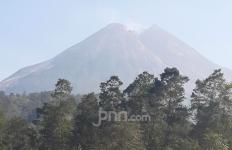 5 Lutung Hitam Turun dari Lereng Gunung Merapi - JPNN.com
