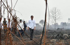 Blusukan ke Lokasi Karhutla Tanpa Mengenakan Masker, Jokowi: Besar Sekali - JPNN.com