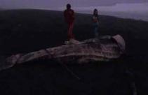 Paus Tutul Ukuran 5 Meter Terdampar di Pinggir Pantai - JPNN.com