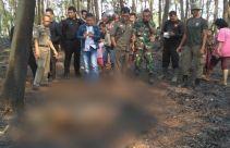 Terjebak di Tengah Kebakaran Hutan, Seorang Warga Tewas Terpanggang - JPNN.com