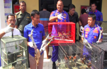 Gagalkan Penyelundupan Ratusan Burung Langka dari Papua - JPNN.com