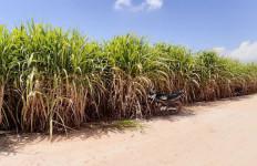 Sistem Pembelian Tebu, Bikin Maju Petani dan Pabrik Gula - JPNN.com
