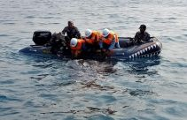 Profauna Indonesia Apresiasi Penyelamatan Hiu Paus Paitonah - JPNN.com