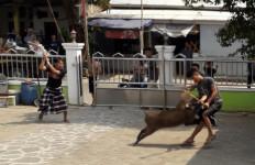 Lihat, Pemuda Duel Melawan Babi Hutan di Halaman Masjid, Terkapar - JPNN.com