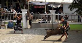 Lihat, Pemuda Duel Melawan Babi Hutan di Halaman Masjid, Terkapar