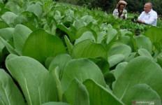 Agrowisata di Berastagi Harus Digarap Serius, Jangan Hanya Danau Toba - JPNN.com