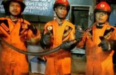 Ular Kobra Hitam Ditemukan di Bawah Tempat Tidur - JPNN.com