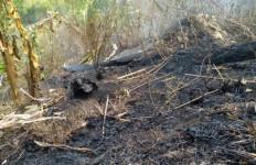 Petugas Gabungan Berhasil Padamkan Kebakaran di Gunung Arjuno - JPNN.com