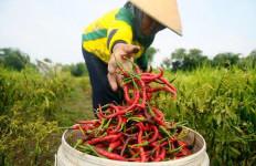 Deflasi Pangan Bukti Produksi Dalam Negeri Membaik - JPNN.com