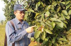 Kementan Dorong Pengembangan Manggis untuk Konservasi dan Mengurangi Emisi Karbon - JPNN.com