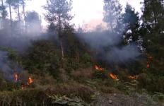 Hutan di Gunung Merapi Terbakar - JPNN.com