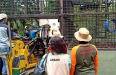 Sempat Dikandangkan Bertahun-tahun, Bento dan Iskandar Kembali ke Alam Liar - JPNN.com