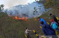 Kebakaran Hutan Gunung Papandayan Garut Berhasil Dijinakkan - JPNN.com