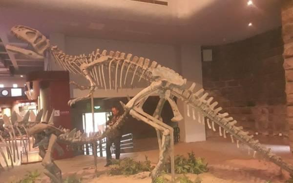 Jejak Kaki Dinosaurus Berusia 100 Juta Tahun Ditemukan di Tiongkok - JPNN.com
