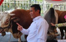 Populasi Sapi Indonesia Meningkat 5 Juta Ekor - JPNN.com