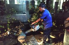 Pelajar Terluka Akibat Pohon Tumbang - JPNN.com