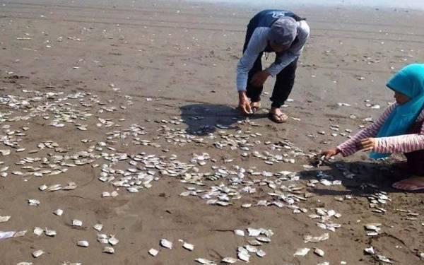 Ribuan Ikan Mati di Pantai Jetis Cilacap - JPNN.com