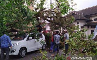 Bruk, Mobil Tertimpa Pohon Besar, Yati Tidak Mengalami Luka