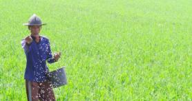 Kementan: Anak Muda Jangan Malu jadi Petani