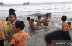 Terjerat Pukat Nelayan, Hiu Tutul Mati - JPNN.com