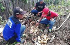 Warga Temukan 33 Butir Telur Ular Piton, Induknya Besar Sekali - JPNN.com