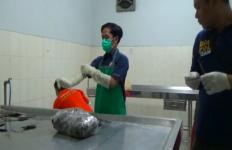 Video Viral Kucing Dicekoki Minuman Keras, Polisi Diminta Segera Bertindak - JPNN.com