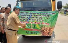 Mangga Cirebon Diekspor ke Negara Eropa dan Timur Tengah - JPNN.com