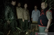 BKSDA Garut Lepasliarkan Tiga Kukang Jawa - JPNN.com