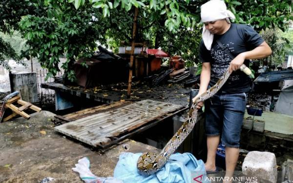 Detik-Detik Ular Piton Muncul di Tengah Warga - JPNN.com