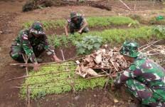 Prajurit TNI di Perbatasan RI-PNG Memanfaatkan Lahan Kosong Jadi Kebun Sayur - JPNN.com