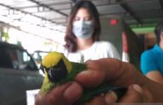 BKSDA Amankan Ribuan Burung Tanpa Dilengkapi Dokumen - JPNN.com