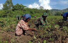 Satgas Yonif RK 136 Ajari Penduduk Suku Mausu Ane Tentang Cara Mengolah Lahan Kosong - JPNN.com