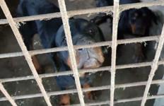 Berita Duka, Wahyudi Meninggal Dunia Diserang 4 Anjing Rottweiler, Tubuhnya Tercabik - JPNN.com