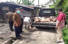 Lihat nih, Belasan Ekor Bangkai Babi di Tebing Tinggi Dievakuasi - JPNN.com