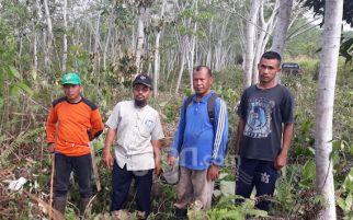 Pohon Sengon Berdampak Positif Bagi Pesantren Hidayatullah Balikpapan