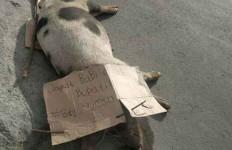 Ratusan Babi Mati Mendadak di Palembang - JPNN.com