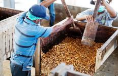 Bea Cukai Ambon Lepas Ekspor Udang Pertama dari Maluku - JPNN.com