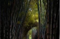 Hutan Bambu Keputih, Destinasi Andalan Milenial di Surabaya - JPNN.com