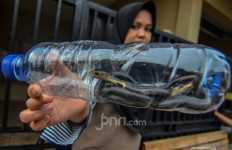 Pakar Beber Pemicu Ular Kobra Masuk Rumah Warga - JPNN.com