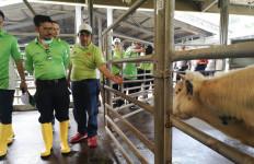 Mentan Syahrul Yasin Limpo: UMKM Sektor Peternakan Harus Berkembang - JPNN.com