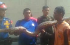 Warga Kerja Bakti, Ada 3 Ular Kobra dan Sanca, di Jakarta Bro! - JPNN.com