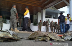 Usut Kematian Belasan Penyu, Gubernur Bengkulu Bentuk Tim Investigasi - JPNN.com