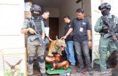 Ada Harimau & Buaya di Rumah Pengemudi Lamborghini Itu - JPNN.com